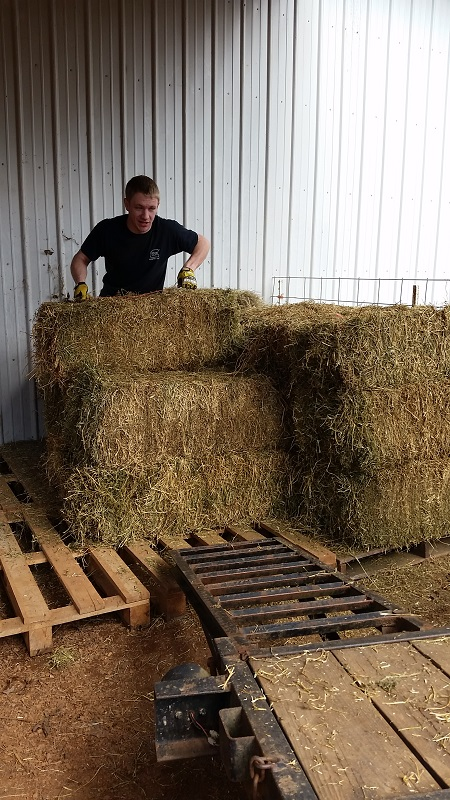 Jon throwing hay around